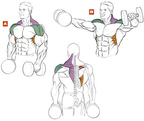 Упражнение 1 – Разведение гантелей в стороны.