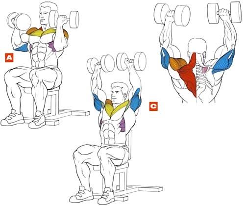 Упражнение 2 – Жим Арнольда