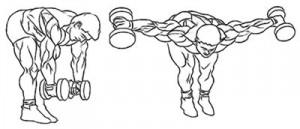 Упражнение 4 – Разведение рук с гантелями в наклоне стоя
