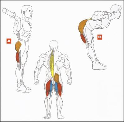 Упражнение 3 – Наклоны со штангой на плечах