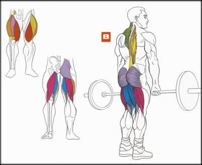 Упражнение 4 – Становая тяга