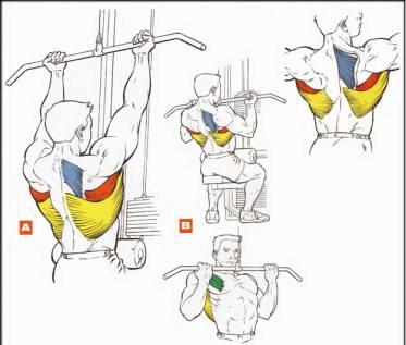 Упражнение 5 – Вертикальная тяга обратным хватом
